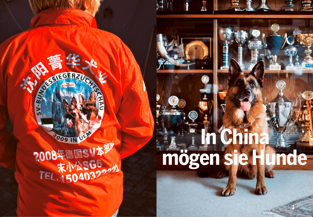 """In China they love dogs"", stern 5/2012 More and more  Chinese love German shepherds and spent a fortune on them - up to 160.000 Euro for a rewarded breeding dog. But they don't get any guarantee from the German breeders - if they die on their way back to China, the money is gone. But it is still a big business for the Chinese, they sell the dogs with a 30 % surcharge in China. Photo: David Hogsholt"